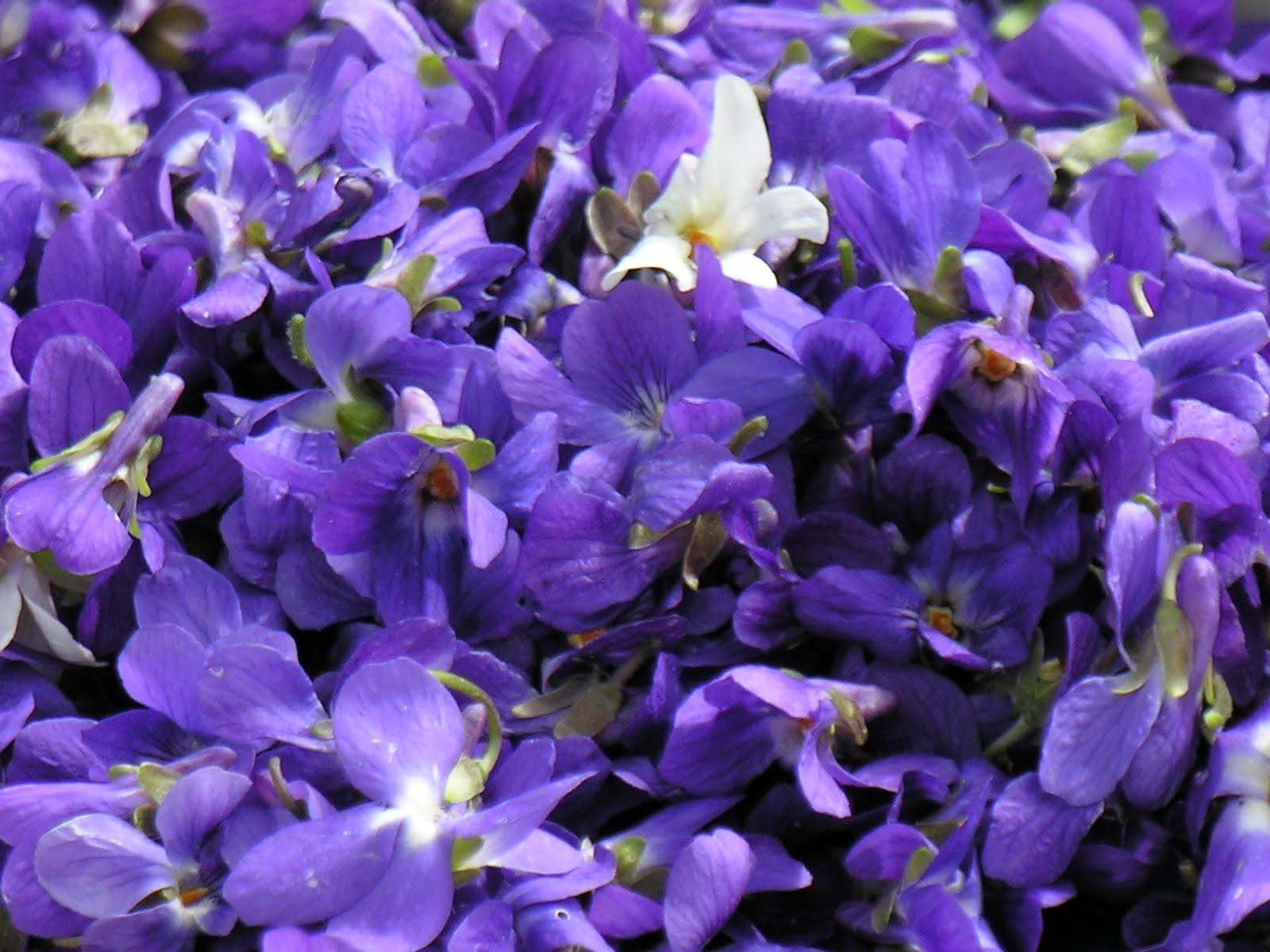 livraison fleur