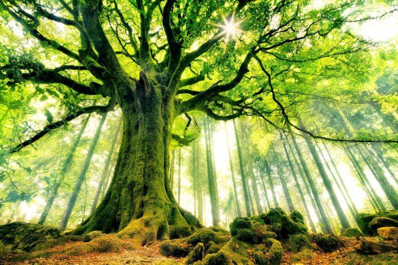 Un arbre dans la nature avec un prêt à taux zéro