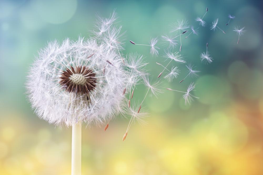 Allergies au pollen désagréables mais traitables