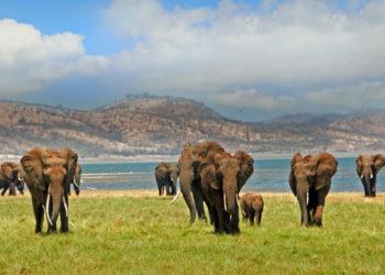 Elephants groupe au Zimbabwe