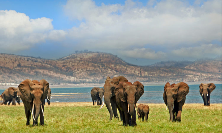Elephants groupe au Zimbabwe